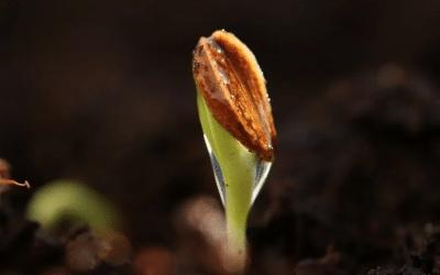 Scarcity to Potency – with self-nourishment & creativity